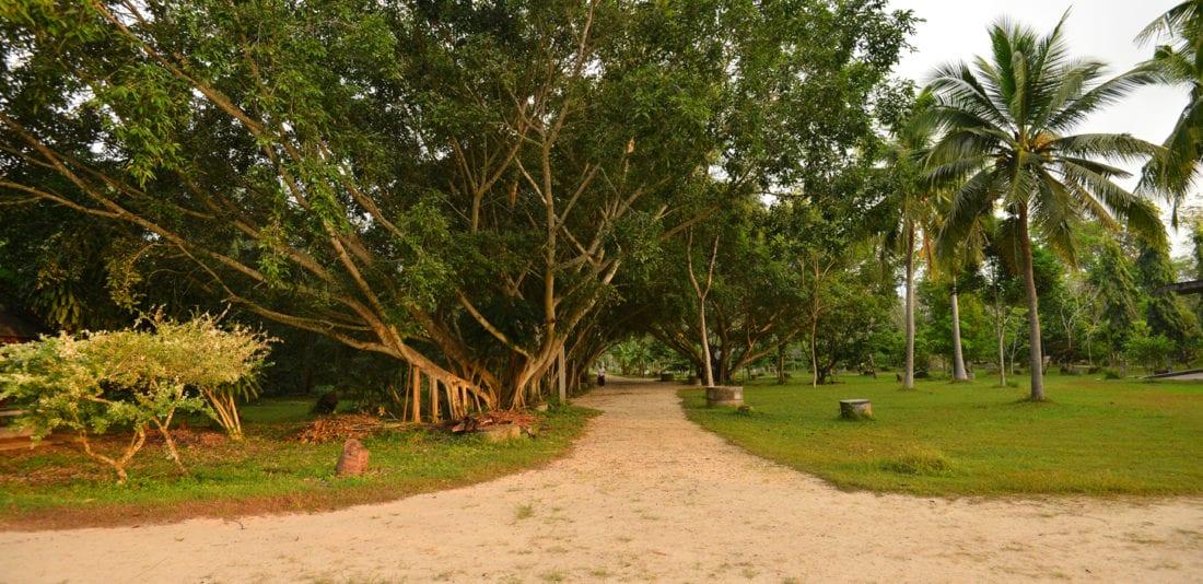 SURVIVAL ASIA TRIP: Десять дней в монастыре Суан Мокк, Таиланд