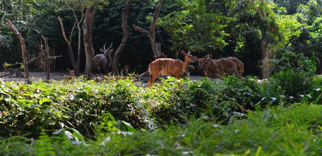 SURVIVAL ASIA TRIP: Сингапурский Зоопарк. Интерактивный тропический лес