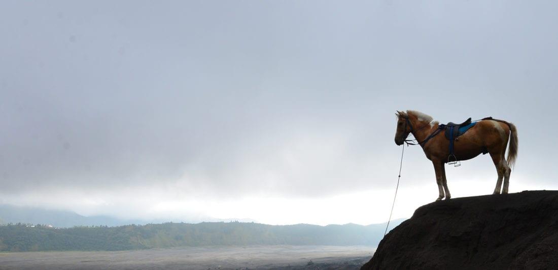 SURVIVAL ASIA TRIP: Грозный вулкан Бромо в нескончаемом утреннем тумане