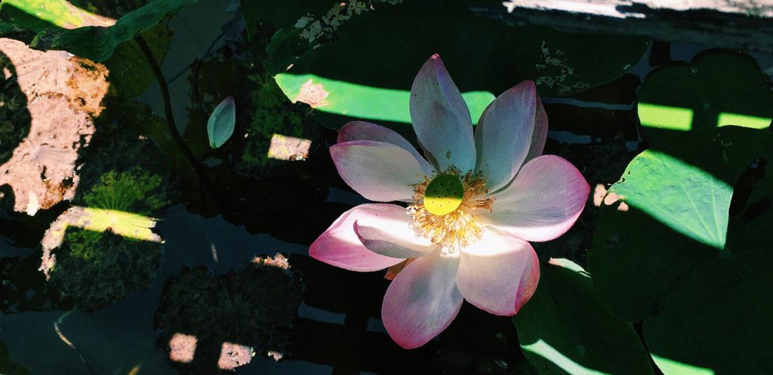 Как буддизм помогает мне жить